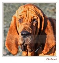 03 bloodhound-web