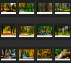 Zusammenfassung-Wald