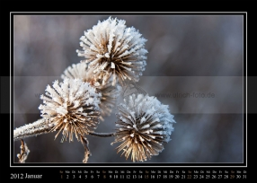 01-2012-web