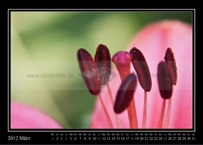 03-2012-web