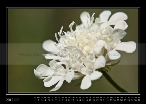 07-2012-web