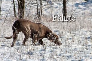 titel-faehrte-306