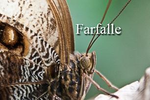titel-farfalle-306